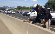 California highway police rescues tiny dog from highway.