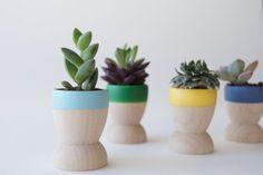 TIPS DECO: 5 maneras diferentes de decorar con plantas