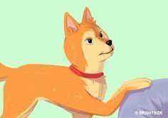 poot op je leggen: Als de hond dit met een zelfvoldane blik doet, probeert hij je te domineren. In deze situatie kun je het beste in de ogen van de hond kijken en de poot van je knie halen.