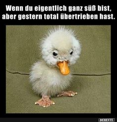 It''s so ugly it's cute. Such an Adorable Little Ugly but Cute Little Baby Duckling on the Farm - Aww! Cute Funny Animals, Funny Animal Pictures, Cute Baby Animals, Funny Cute, Animals And Pets, Cute Pictures, Animal Pics, Super Funny, Ugly Animals