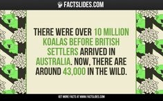 There were over 10 million koalas before British settlers arrived in Australia. Now, there are around 43,000 in the wild.