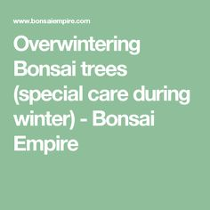 Overwintering Bonsai trees (special care during winter) - Bonsai Empire