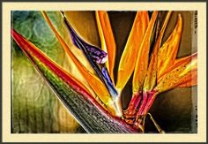 Bird Talk - Bird Of Paradise By Sharon Cummings Framed Print By Sharon Cummings