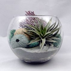addition of urchins in this terrarium!love the addition of urchins in this terrarium! Mini Terrarium, Air Plant Terrarium, Garden Terrarium, Succulents Garden, Air Plants, Indoor Plants, Plantas Indoor, Silver Plant, Kitchen Window Sill