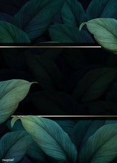 Tropical Background, Flower Background Wallpaper, Leaf Background, Flower Backgrounds, Wallpaper Backgrounds, Backdrop Background, Fond Design, Web Design, Vegetal Concept