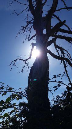 Árboles y naturaleza (12)