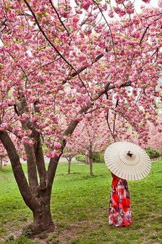 New York Cherry Blossom Central Park || Best Places to Spot Cherry Blossoms in New York City + Photography Tips // Local Adventurer #centralpark #nyc #cherryblossom #spring #manhattan