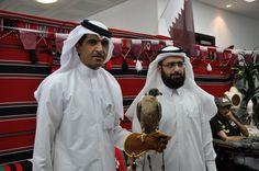 Falconry, Qatar