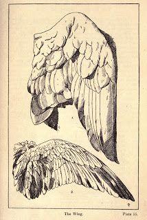 Vintage Ephemera: Engraving; Wings, 1920