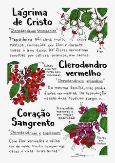 Garden Trees, Trees To Plant, Garden Plants, Plant Guide, Succulent Gardening, Cactus Y Suculentas, Farm Gardens, Botanical Prints, Botany