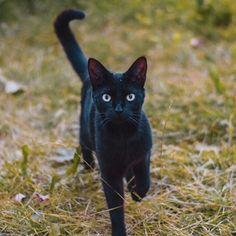 My new friend ❤️ Black Queen