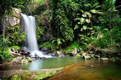 Curtis Falls on beautiful Tamborine Mountain, Australia.  Love that place!