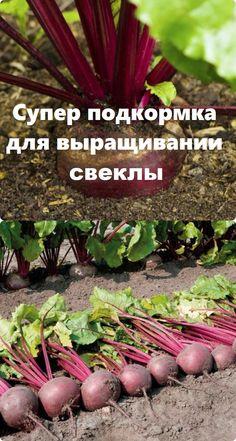 Plants, Organic Gardening, Flowers, Fruit Garden, Organic Gardening Pest Control, Garden Yard Ideas, Veg Garden, Growing, Small Farm