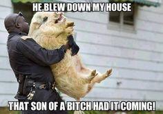 little piggy being arrested