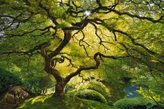 I want this so badly...... some day I will be able to buy it.  Japanese maple - Peter Lik