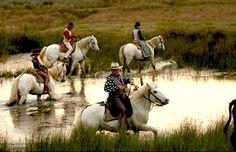 Gardians et chevaux camarguais  www.saintesmaries.com