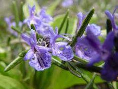 confettura di fiori di rosmarino