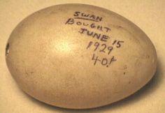 Swan Egg - Royal Alberta Museum