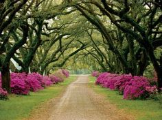 Trees And Flowers Lined Avenues And Roads