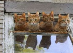 Too Adorable -This one is for  Ginger cat lover's the world over!