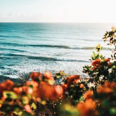 Find images and videos about summer, nature and flowers on We Heart It - the app to get lost in what you love. Beautiful World, Beautiful Places, Beautiful Beach, To Infinity And Beyond, Paladin, Pretty Pictures, The Great Outdoors, Wonders Of The World, Mother Nature