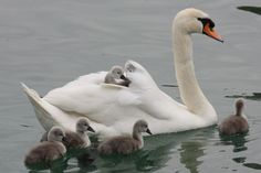 llbwwb:    2 Babies get a ride :) By:sasoli