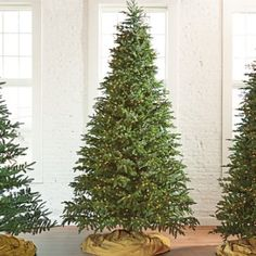 Our fullest-profile, real-as-life Fraser Fir Tree has a traditional, natural look, and it a decorator dream. The realism is so impressive,    while the abundance of boughs creates the perfect stage for all of your favorite ornaments. Layered branches alternate from extra dense to wide open, end    in realistically sculpted tips and are pre-lit with bright white mini-lights. Select a height that perfect for your space and let the festivities    begin.            Beautiful, natural-looking...