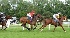Image from http://upload.wikimedia.org/wikipedia/commons/8/81/Horse-racing-3.jpg.