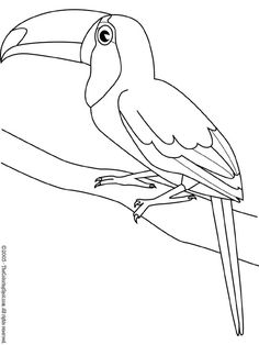 Toucan Bird Coloring Page For Kids - Coloring Ideas Fruit Coloring Pages, Animal Coloring Pages, Coloring Book Pages, Stencil Patterns, Mosaic Patterns, Stained Glass Patterns, Bird Drawings, Animal Drawings, Easy Drawings