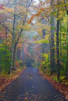 Road through Cades Cove, Tennessee in the fall. Digital Imagery by Bill Starr