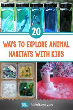 20 Wild Ways to Explore Animal Habitats With Kids Arctic Habitat, Ocean Habitat, Rainforest Activities, Fun Activities, Teaching Science, Science Labs, Elementary Science, Teaching Kindergarten, Science Classroom