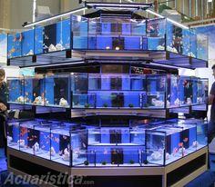 http://www.acuaristica.com/blog/2012/05/esteticas-y-funcionales-baterias-de-oceanlife/