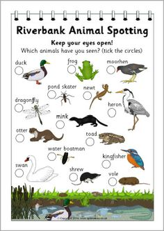 A form for children to tick off various animals they see at the riverbank. Nature Activities, Science Activities, Activities For Kids, Preschool Ideas, Science For Kids, Life Science, Science Nature, Stem Science, Nature Hunt