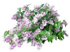 Shrubs, Photoshop, Landscape, Flowers, Plants, Garden, Image, Design, Shade Shrubs