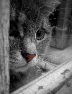 ** Sweet angel with pensive face; yearns for beyond window.