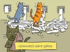 Frases, chistes, anécdotas, reflexiones y mucho más.: Chistes Gráficos. Gimnasio para gatos.