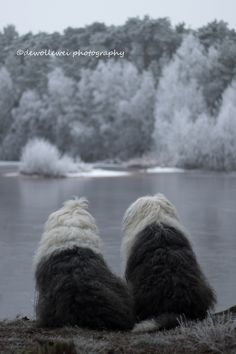 https://flic.kr/p/Ra5qGH | winter view