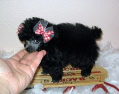 """Get terrific recommendations on """"poodle puppies"""". They are actually on call for you on our site. Tiny Puppies, Teacup Puppies, Cute Puppies, Cute Dogs, Poodle Puppies, Animals And Pets, Cute Animals, Farm Animals, Daisy Dog"""
