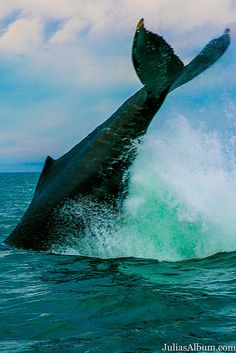 Whale watching in Brier Island in the Bay of Fundy in Digby County, Nova Scotia, Canada