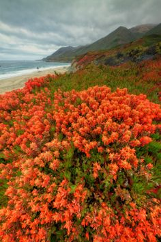 Summer Morning Color - Central California Coast