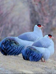 Most Beautiful Birds, Pretty Birds, Love Birds, Animals Beautiful, Bird Pictures, Animal Pictures, Cute Pictures, Rare Animals, Animals And Pets