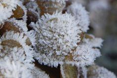 Winter, kou