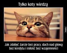 Koty wiedzą... #kwejk #humor #heheszki #śmieszki #żarty #żarciki #lol #haha #hehe #śmieszne #śmiesznie #obraz #obrazek #zdjęcia #zdjęcie #kot #koteł #zwierzęta #one #wiedzą #jedzenie #żarcie #praca #kasa #pieniądze #miłość #słodko #sprytne
