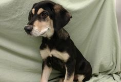 Parker is a 10-week-old male shepherd/malamute mix. He will weigh about 80 pounds when grown. He gets along well with the other dogs. The $350 adoption fee helps cover spay/neuter, vaccinations, microchip, vetting, food and care. Call Pets Without Partners at 243-6911. Go to www.petswithoutpartners.org. Go to www.redding.com for more adoptable pets.