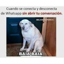 Comenta Si Te A Pasado Labrador Retriever Animals Memes