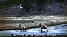 Comment les loups changent les rivières - Narrator is in English