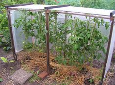 Latest news; In this tip there are descriptions of many roofs. Chapter A)# describes a flat roof with corrigated plate and plastic foil at 3 sides. I have this roof in my allotment garden. Nine tom…