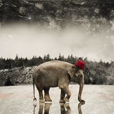 Elephant Art Print  Animal Photography  Art for by TheLonelyPixel, $30.00