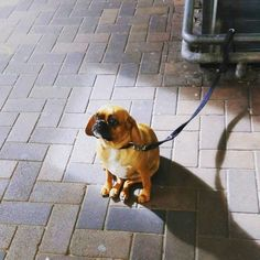 Andy, the creator of Sad Dogs Outside Shops, is originally from Ireland and started the page a few years ago after he noticed all the dogs in Australia tied up on the sidewalk. | These Sad Dogs Outside Shops Will Make You Cry