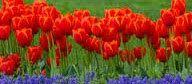 Deus é louvado por retirar do cativeiro o seu povo. (Salmo 126). : Texto: 1° E respondeu José a Faraó, dizendo: (Gêne...